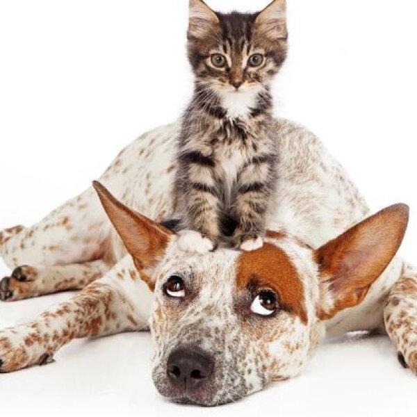 Gatos são apegados à casa em que moram e nem tanto aos seus donos. Cães são dependentes dos humanos e não se importam com o ambiente em que vivem.  Mito ou verdade?