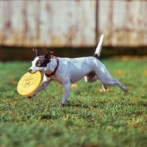 Os cuidados com exercícios com os cães e gatos
