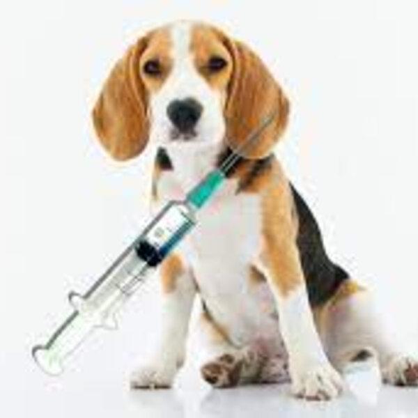 Como anda a vacinação do seu pet?