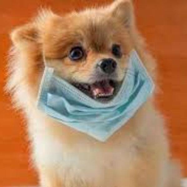 Posso passear com meu cachorro nesta pandemia?