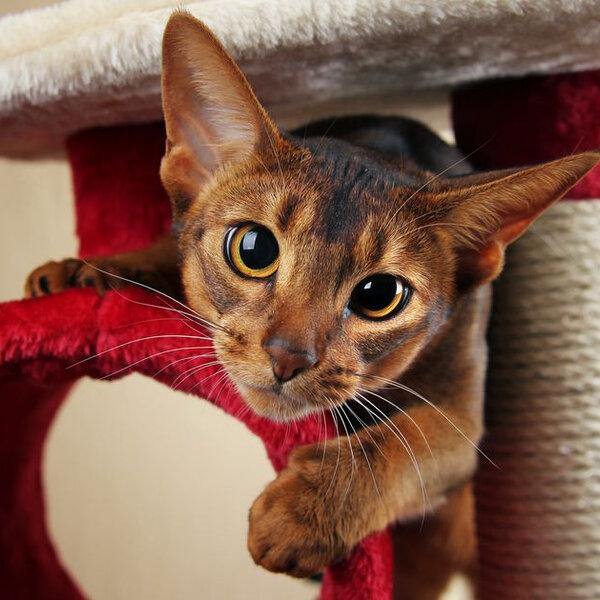 Ouça essas dicas para melhorar a rotina dos gatos!