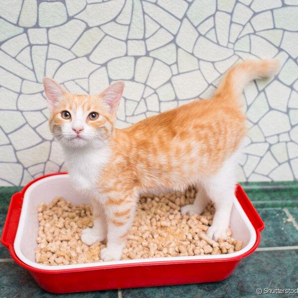 Saiba mais sobre o tipo de areia e detalhes sobre a caixa sanitária do seu gato