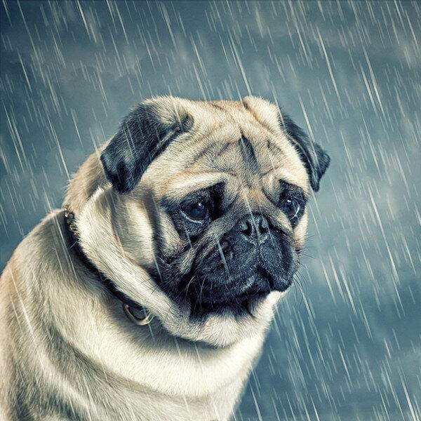 Cães e gatos podem ficar deprimidos, assim como nós?