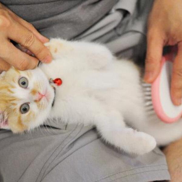 Você sabia que os gatos podem e devem ser treinados?
