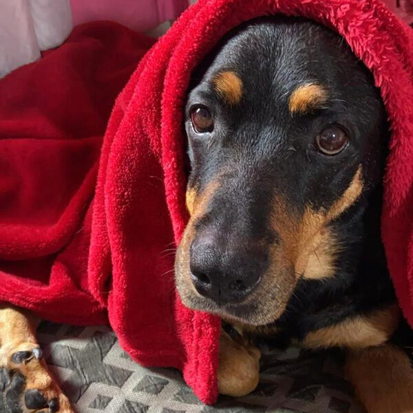 Hoje começa o inverno... Fique atento às dicas de como cuidar do seu pet nessa época do ano!