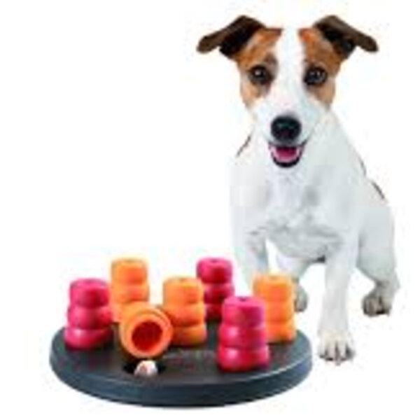 Aproveite a quarentena para promover atividades com seu pet