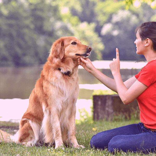 Como saber se o seu pet está precisando de um atendimento comportamental?