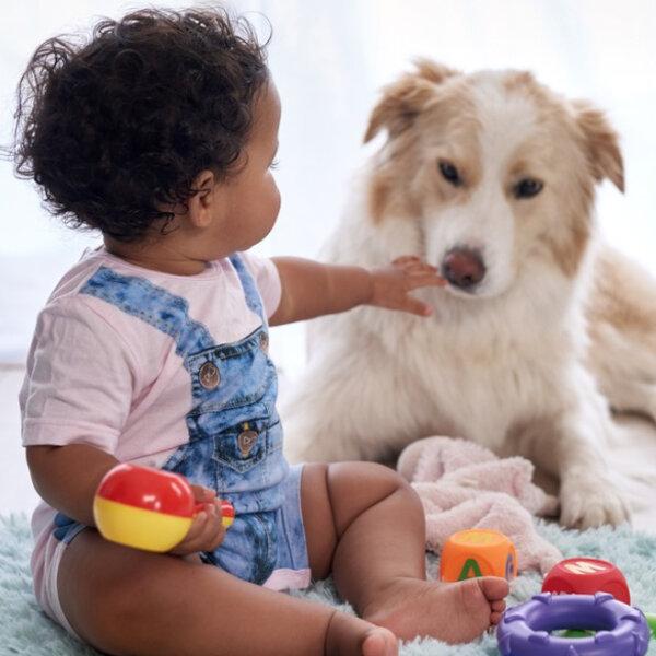 Pense bastante antes de dar um animal de estimação para as crianças. A responsabilidade de cuidar será sempre do adulto e a decisão não pode ser tomada por impulso