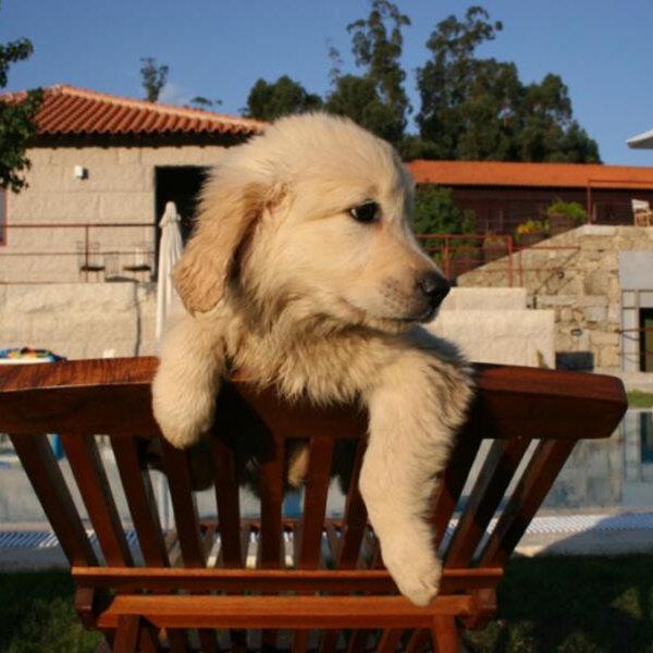 Dúvida: colocar seu cachorro numa hospedagem ou viajar com ele?