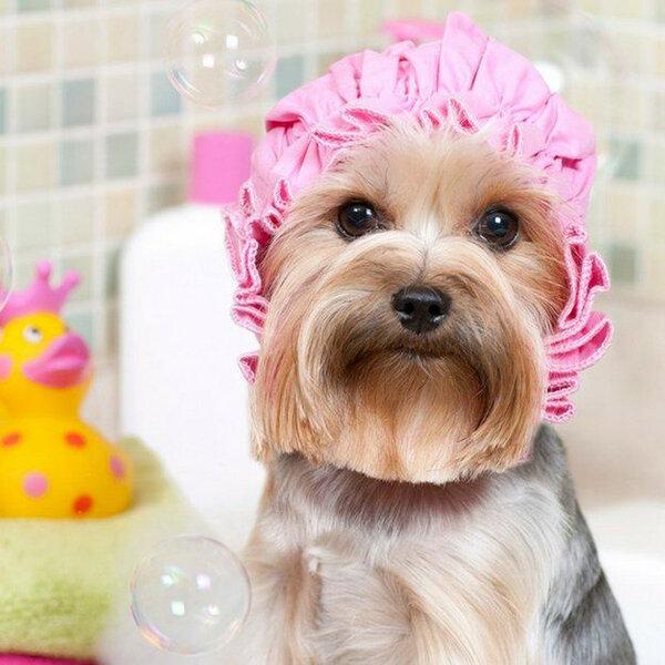 Existe uma frequência ideal de banhos para o seu cachorro?