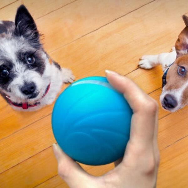 Você sabe a importância da brincadeira para a saúde do seu animal?
