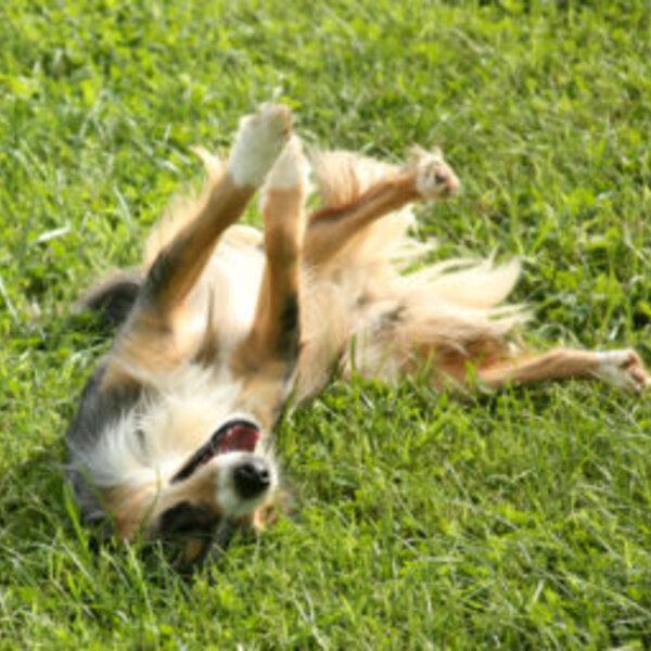 Se o seu animal apresenta algum comportamento estranho, converse com seu veterinário!