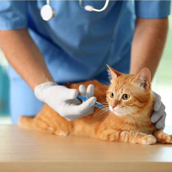 Seu pet está com a vacinação em dia?