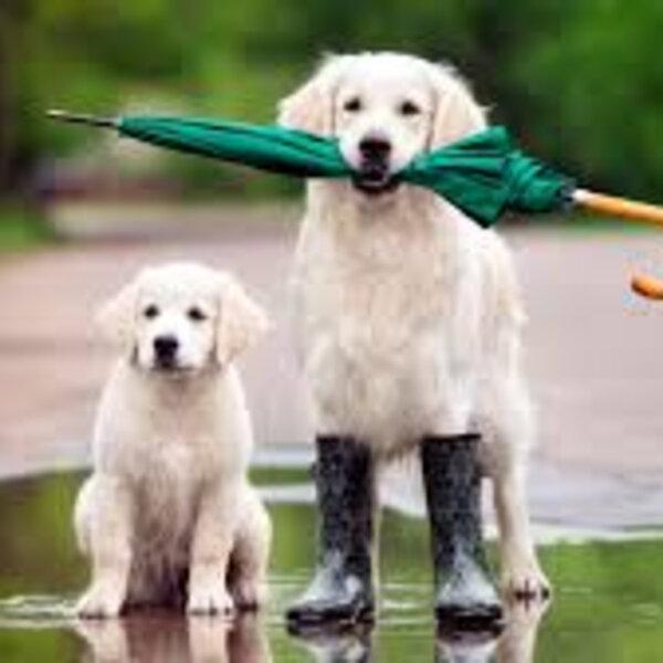 Cuidados nos passeios em dias de chuva
