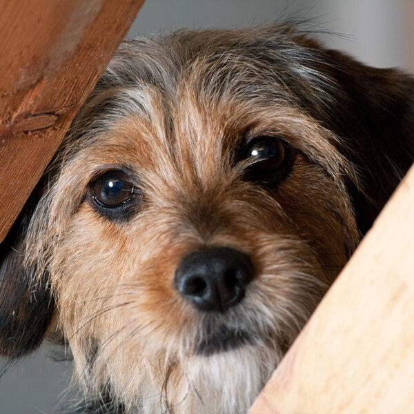 Se o seu animal é muito medroso ou passou por traumas, converse com seu veterinário