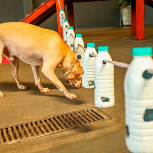 As diversas formas de enriquecimento ambiental para o seu pet