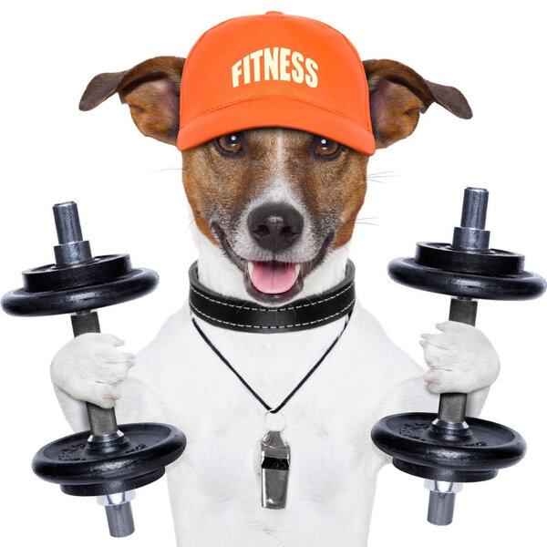 Qual é a frequência e a intensidade ideal de exercícios para fazer com um cão?