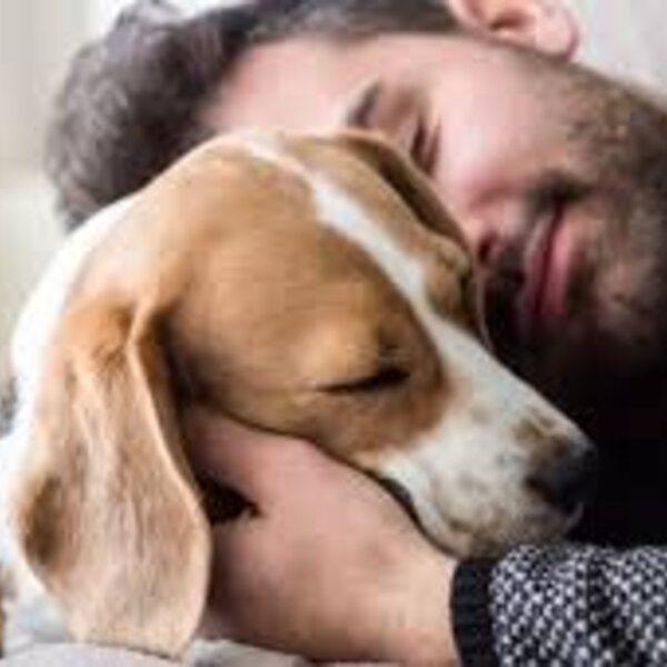 Aproveite o feriado para curtir seu cão ou gato!