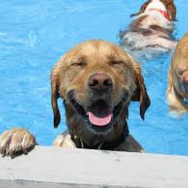 Nem todo cão pode nadar. Tenha cuidado com piscina!