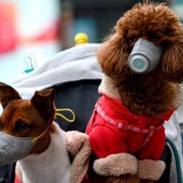 Sobre a contaminação de Covid- 19 e outros assuntos ligados a cães e gatos, mande sua pergunta!