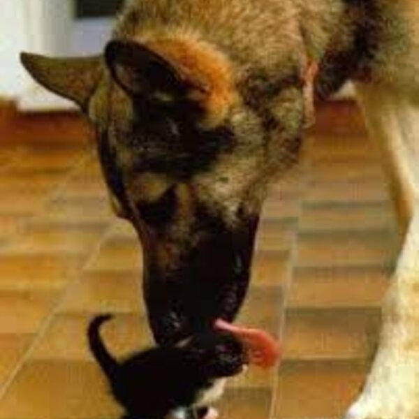 Você já tem um animal em casa e resolveu adotar mais um... Fique atento à adaptação deles!