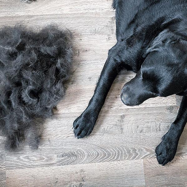 Você sabe como controlar a quantidade de pelos que cai dos seus cães e gatos?