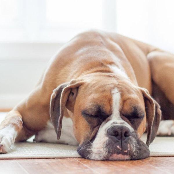 É normal os cães e gatos dormirem bastante?