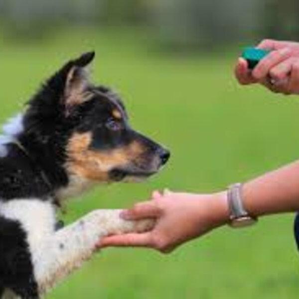 Reforce e premie o comportamento que você deseja que seu cão tenha!