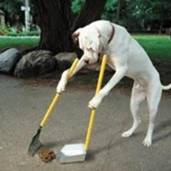 Siga estas recomendações quando levar seu cachorro ao ParCão