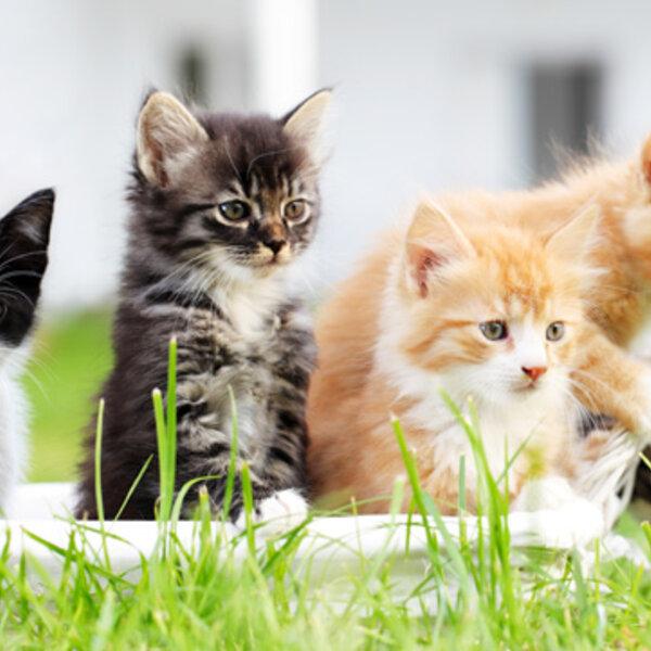 17 de Fevereiro - Dia Mundial do Gato