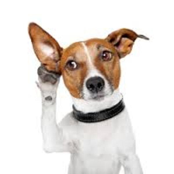 Cães e gatos têm a audição infinitamente melhor que a nossa