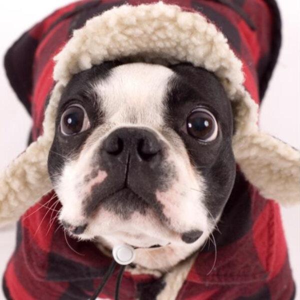 Que cuidados devemos tomar com nossos pets em dias mais frios?