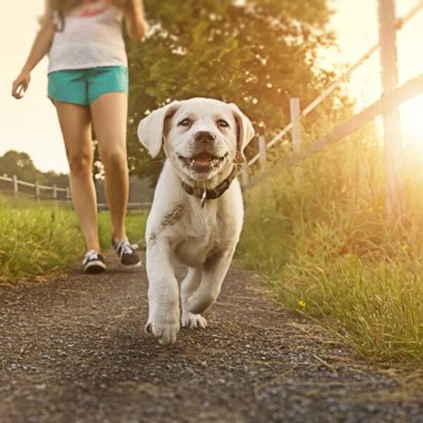 Você passei com o seu cachorro sem coleira? Fique atento aos riscos!