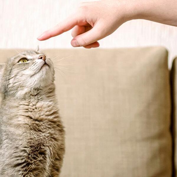 Dia do educador canino e felino