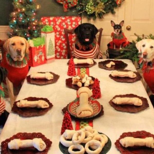 Fique atento com as comidas que as visitas podem dar ao seu cão na noite de Natal!