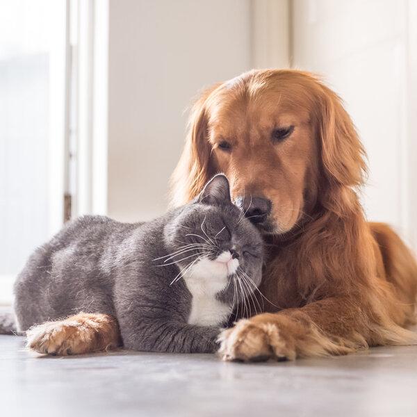 14 de março é o Dia Nacional dos Animais