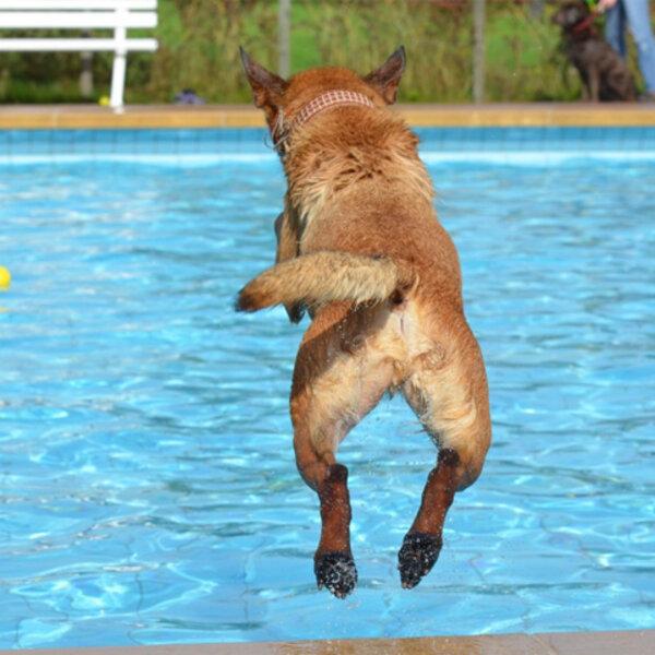 Os cuidados que devemos tomar com os cães nas piscinas