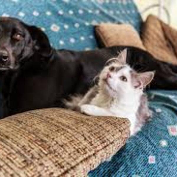 Independente da pandemia, você já parou para pensar que cães e gatos vivem em constante quarentena?