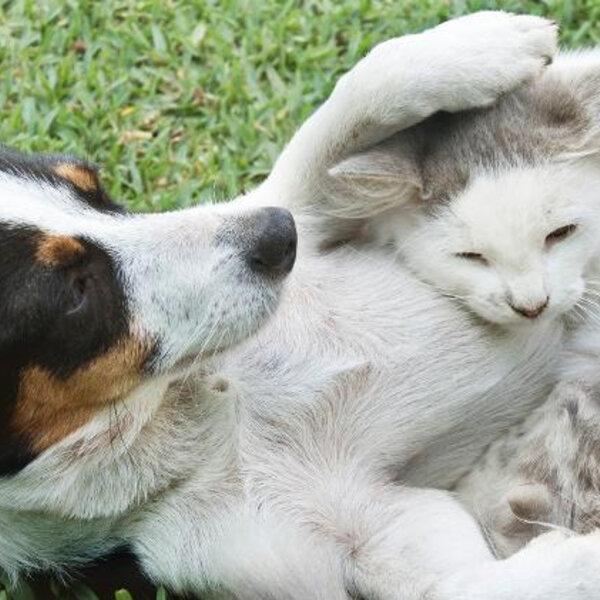 Covid-19 não é transmitido por cães e gatos