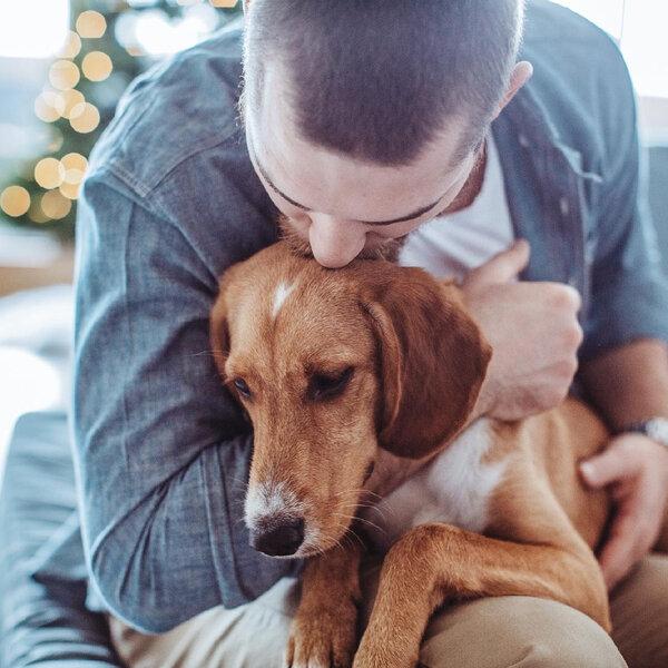 A importância das trocas afetivas com cães e gatos em tempos de isolamento social