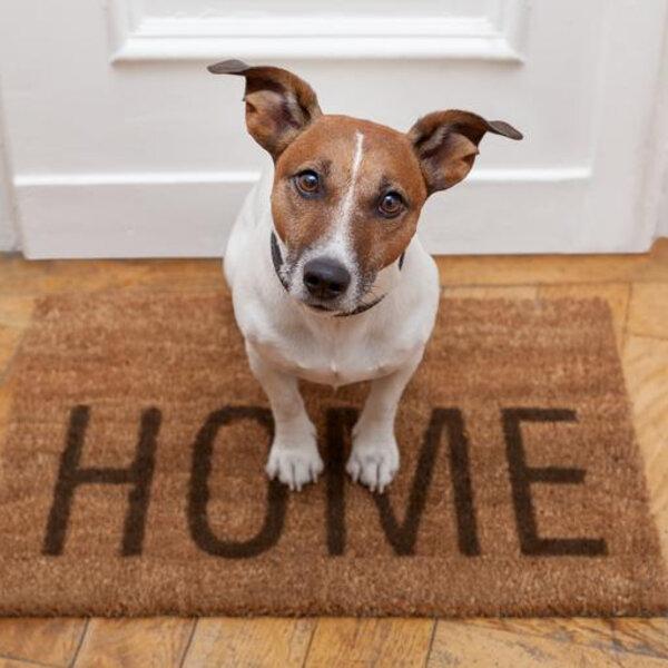 Cães que moram em casas grandes precisam passear?
