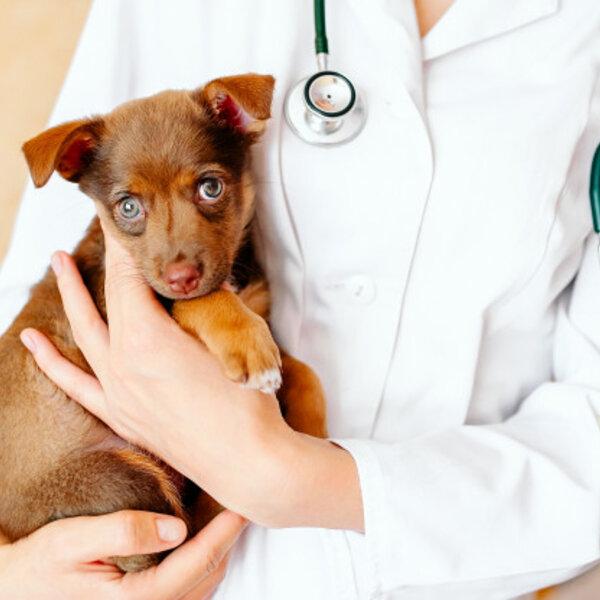 É normal filhotes de cachorros terem soluço?