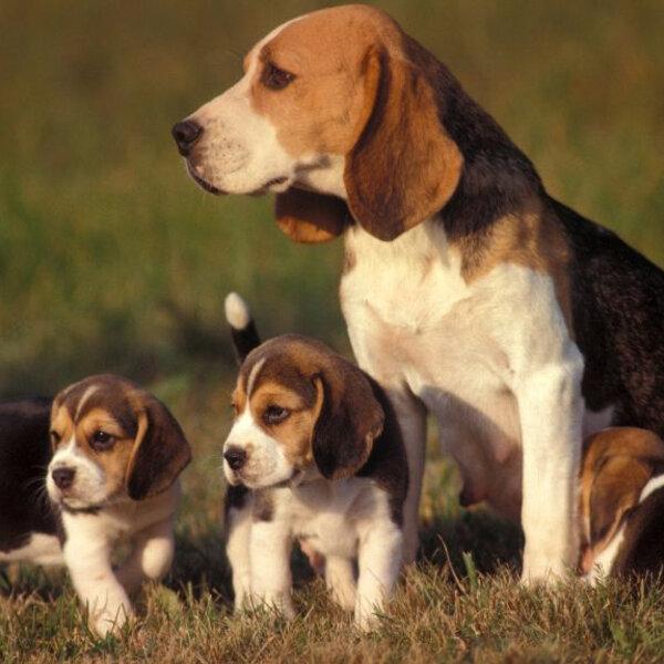 Mito ou verdade: todo cachorro ou gato precisa cruzar ao menos uma vez?
