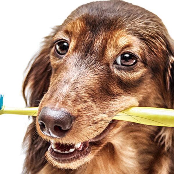 Tenha atenção à saúde bucal do seu cão e do seu gato