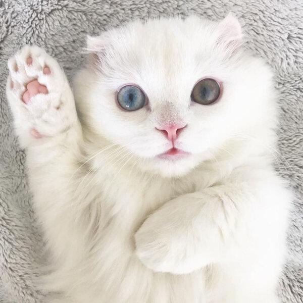 Hoje é Dia do Canhoto. Você sabia que gatos podem ser destros, canhotos ou ambidestros?