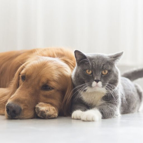 A rotina faz bem para os cães e gatos?