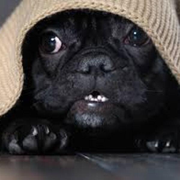 Confira as dicas para ajudar seu cão a tolerar barulhos de trovões, fogos e estalinhos!