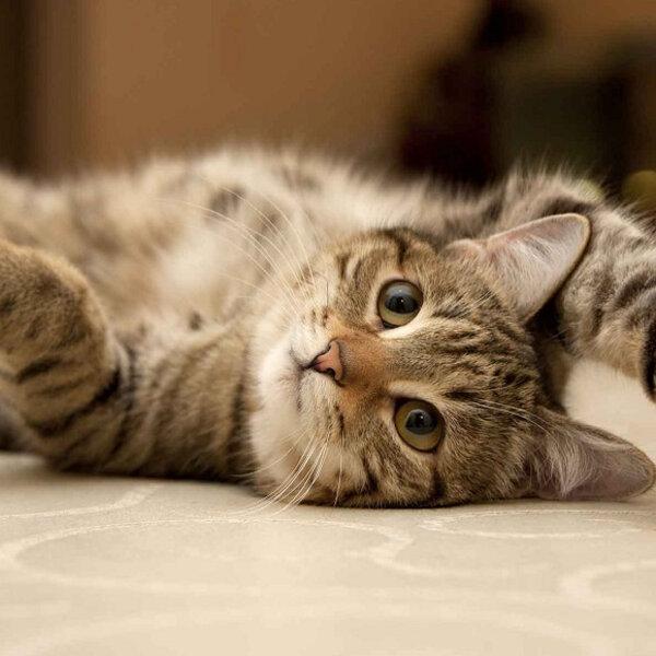 A rotina dos gatos