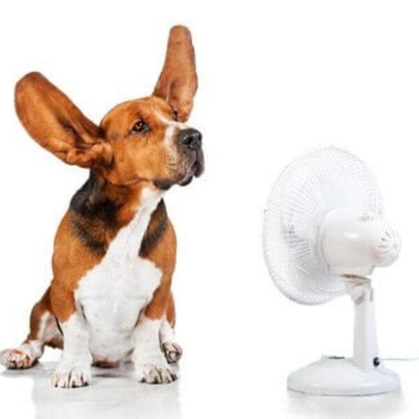 Como as mudanças de temperatura afetam os cães e gatos?
