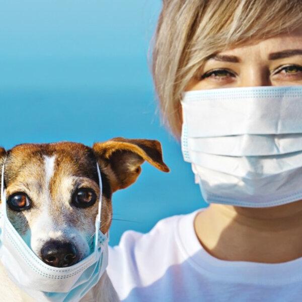 Ainda respondendo às perguntas dos ouvintes sobre o Coronavírus: há risco de o meu animal desenvolver a doença?